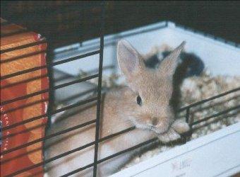 Conejos enanos m a m m a - Casas para conejos enanos ...